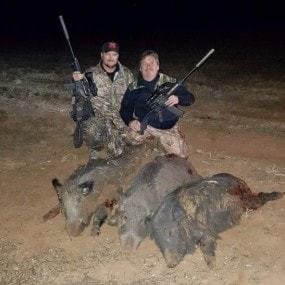 hog hunts with tim herbert